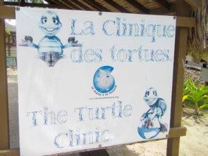 Te Mana O Te Moana Sea Turtle Clinic Moorea